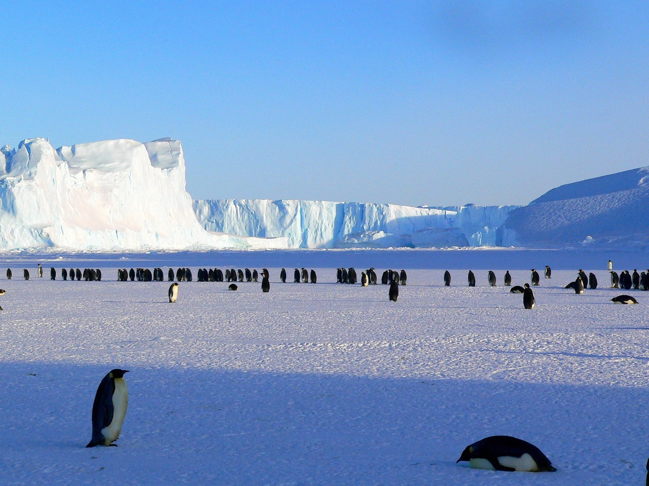 What Does Penguin 4.0 Mean For Your SEO?