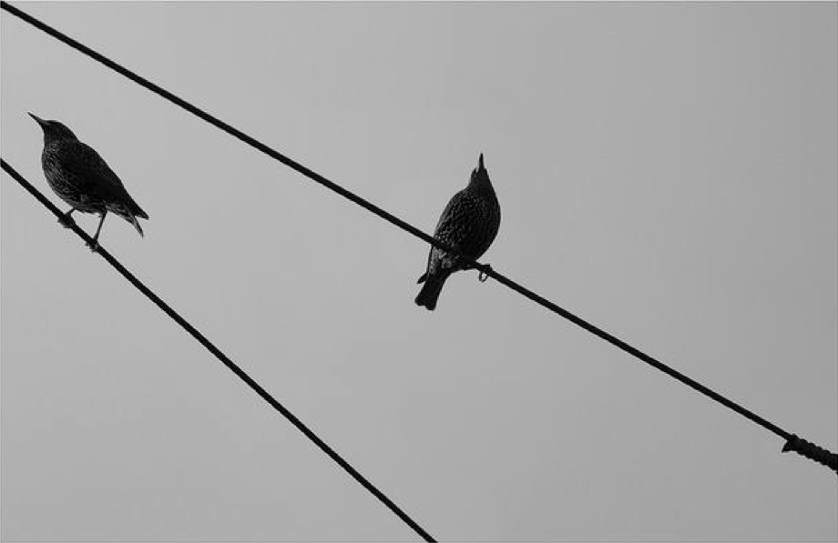 two birds on wires